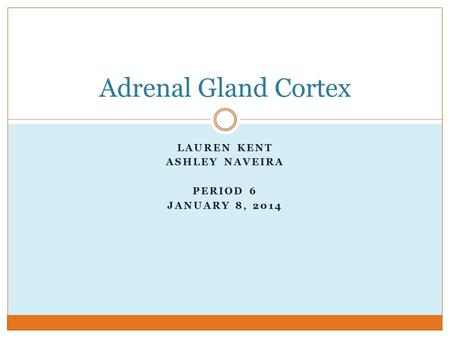 LAUREN KENT ASHLEY NAVEIRA PERIOD 6 JANUARY 8, 2014 Adrenal Gland Cortex.