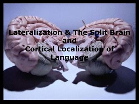 Lateralization & The Split Brain and Cortical Localization of Language.