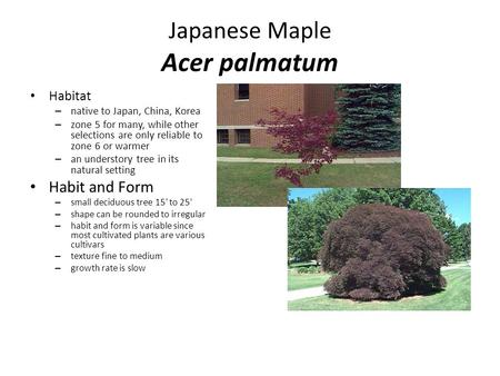 Japanese Maple Acer palmatum Habitat – native to Japan, China, Korea – zone 5 for many, while other selections are only reliable to zone 6 or warmer –