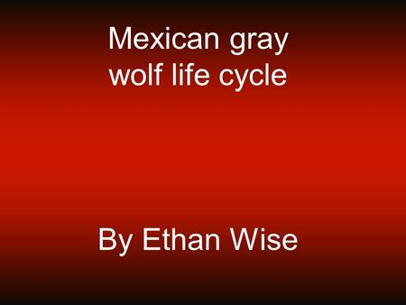 Mexican gray wolf life cycle