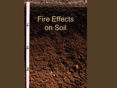 Fire Effects on Soil. What are the Functions of Soil within Ecosystems? Provides a medium for plant growth and supplies nutrients Regulates the hydrologic.