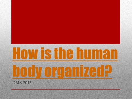 How is the human body organized?