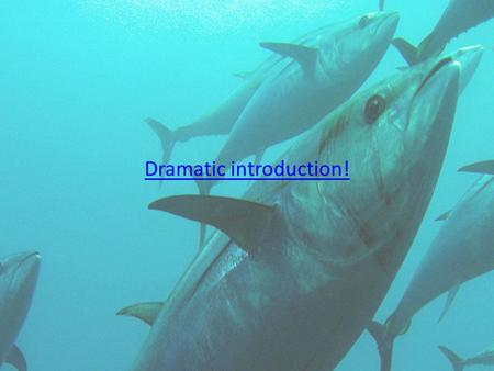 """fishing blue fin tuna into extinction """"nearly a century of indiscriminate and unlimited fishing for pacific bluefin tuna has not only brought the tuna itself to the brink of extinction, but has also resulted in innumerable marine mammals, sea turtles and sharks being caught and killed by tuna fishing gear,"""" said jane davenport, senior staff attorney at defenders of wildlife."""