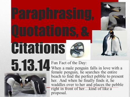 Paraphrasing, Quotations, & Citations 5.13.14 Fun Fact of the Day: When a male penguin falls in love with a female penguin, he searches the entire beach.