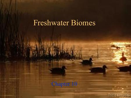 Freshwater Biomes Chapter 10 Objectives  Describe the factors that characterize the various types of aquatic biomes. 10.1 Aquatic Biomes.