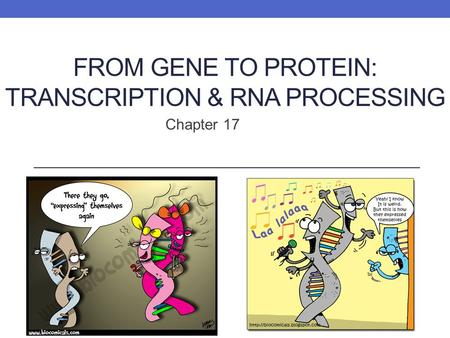 FROM GENE TO PROTEIN: TRANSCRIPTION & RNA PROCESSING Chapter 17.