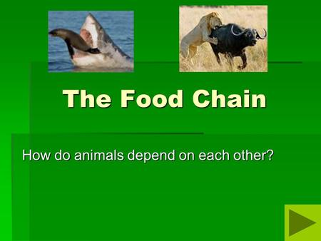 How do animals depend on each other?