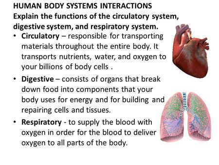 HUMAN BODY SYSTEMS INTERACTIONS Explain the functions of the circulatory system, digestive system, and respiratory system. Circulatory – responsible for.