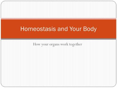 How your organs work together Homeostasis and Your Body.