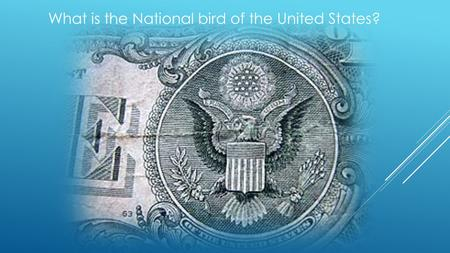 What is the National bird of the United States?. BALD EAGLE HALIAEETUS LEUCOCEPHALUS.