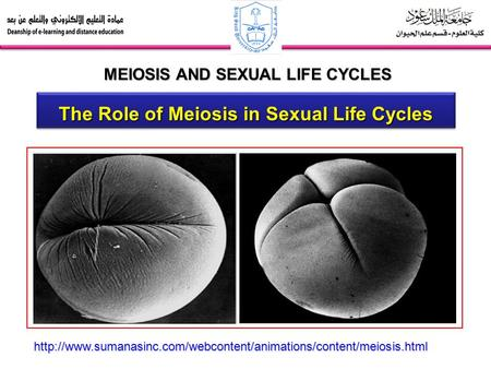 MEIOSIS AND SEXUAL LIFE CYCLES