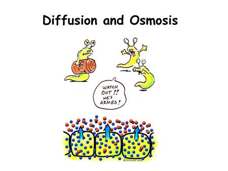 Diffusion and Osmosis. Diffusion Solute molecules moving from an area of high concentration to an area of low concentration –Random motion drives diffusion.