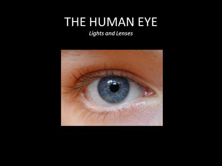 THE HUMAN EYE Lights and Lenses. Explore: How does the eye focus an image? Procedure: -Position yourself so you can clearly see an object across the room.