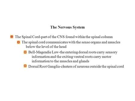 The Nervous System The Spinal Cord-part of the CNS found within the spinal column The spinal cord communicates with the sense organs and muscles below.