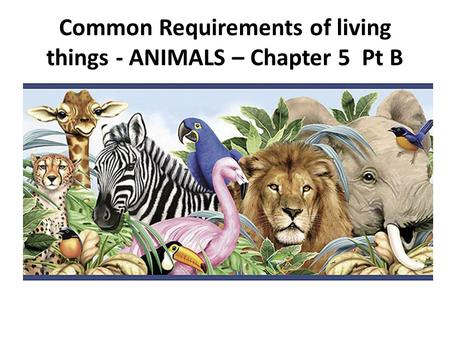 Common Requirements of living things - ANIMALS – Chapter 5 Pt B.