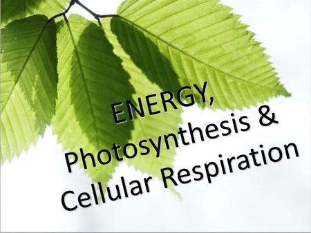 ENERGY, Photosynthesis & Cellular Respiration