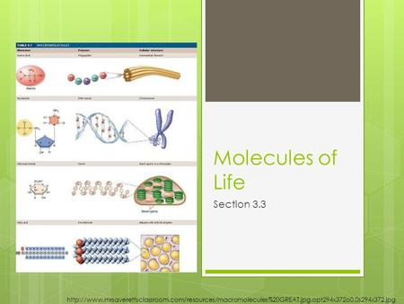Molecules of Life Section 3.3