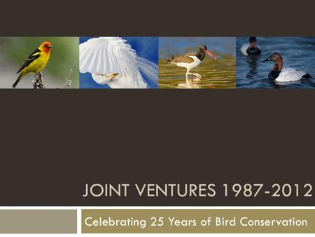 JOINT VENTURES 1987-2012 Celebrating 25 Years of Bird Conservation.