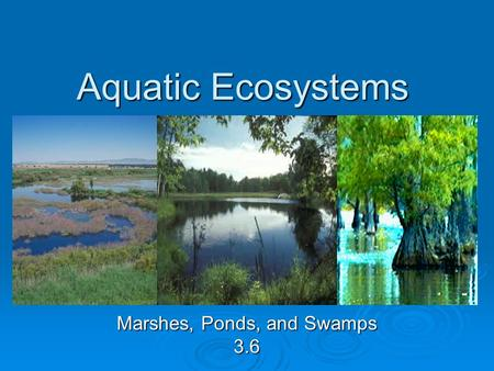 Aquatic Ecosystems Marshes, Ponds, and Swamps 3.6.