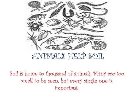 ANIMALS HELP SOIL Soil is home to thousand of animals. Many are too small to be seen, but every single one is important.