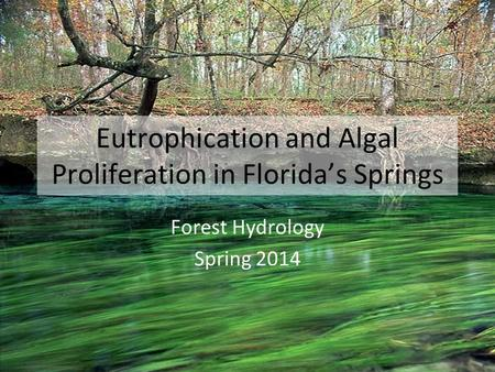 Eutrophication and Algal Proliferation in Florida's Springs Forest Hydrology Spring 2014.