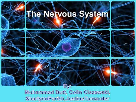 The Nervous System. Types Central Nervous System (CNS)Peripheral Nervous System (PNS)