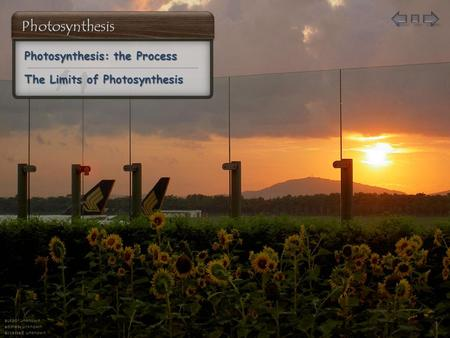 author unknown address unknown accessed unknown Photosynthesis: the Process Photosynthesis: the Process The Limits of Photosynthesis The Limits of Photosynthesis.