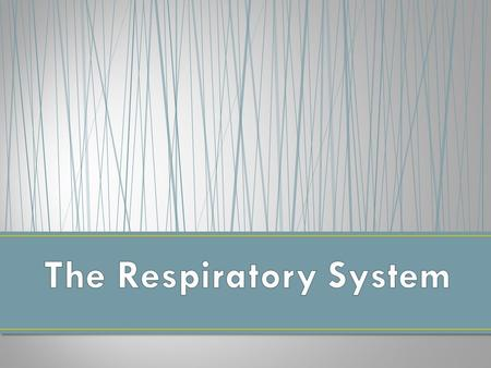 Your respiratory system is made up of the organs in your body that help you to breathe. Respiration = Breathing. The goal of breathing is to deliver oxygen.