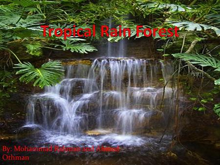Tropical Rain Forest By: Mohammad Rahman and Ahmed Othman.