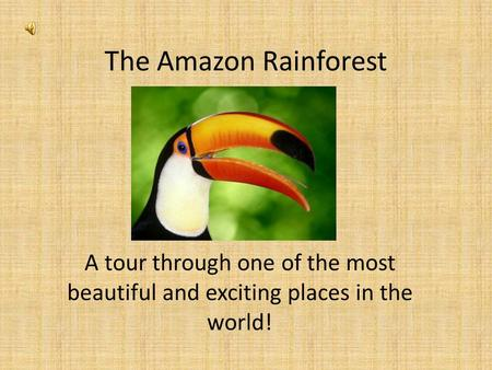 The Amazon Rainforest A tour through one of the most beautiful and exciting places in the world!
