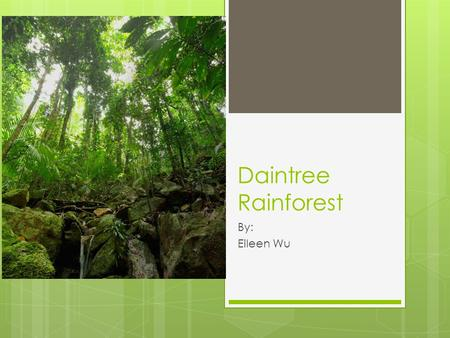 Daintree Rainforest By: Eileen Wu. The Daintree The Daintree is a tropical rainforest in Queensland, Australia. It is listed as a World Heritage Area,