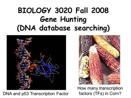 BIOLOGY 3020 Fall 2008 Gene Hunting (DNA database searching)