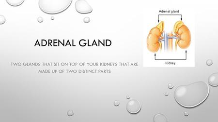 ADRENAL GLAND TWO GLANDS THAT SIT ON TOP OF YOUR KIDNEYS THAT ARE MADE UP OF TWO DISTINCT PARTS.