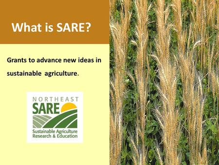 Grants to advance new ideas in sustainable agriculture. What is SARE?