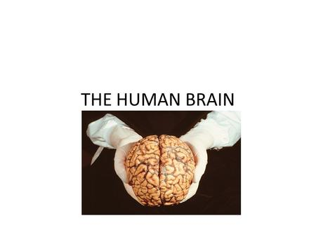 THE HUMAN BRAIN. 3.5 pounds of gelatinous material at the root of everything we do/are.