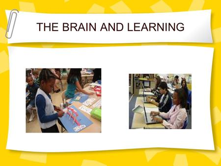 THE BRAIN AND LEARNING. OBJECTIVES With support of notes, participants will be able to: describe how learning is related to brain structure and functions.
