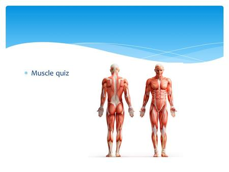  Muscle quiz. Portion Control Hazards of Obesity Yellow- globules of fat.