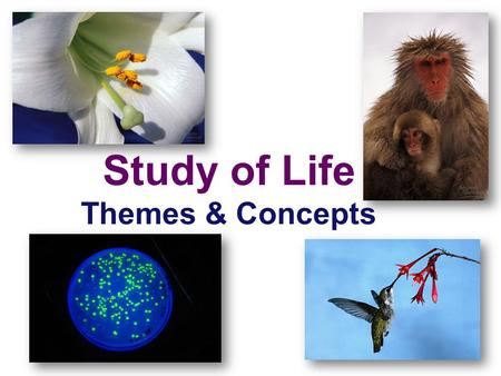 Study of Life Themes & Concepts Umbrella Concepts Big Ideas and Recurring Principles.
