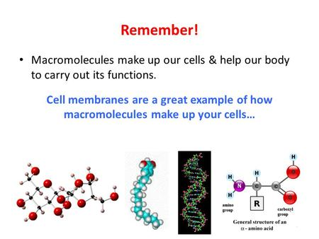 Remember! Macromolecules make up our cells & help our body to carry out its functions. Cell membranes are a great example of how macromolecules make up.