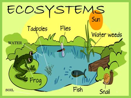 Ecosystems. - ppt video online...