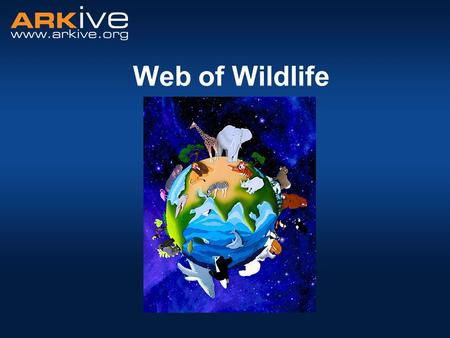 Web of Wildlife. All living things need food to survive. –Organisms obtain their food in different ways. −Some animals eat plants, some eat other animals.