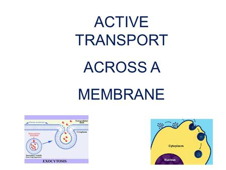 1 ACTIVE TRANSPORT ACROSS A MEMBRANE. Overview of Active Transport Active Transport 1. Carrier Protein 2. Endocytosis3. Exocytosis.