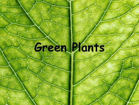 Green Plants. 4 Living Processes  Movement- towards light  Reproduction- fruits and seeds  Nutrition- plants make their own food  Growth- seedlings.