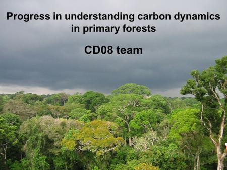 Progress in understanding carbon dynamics in primary forests CD08 team.