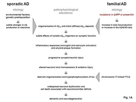 Sporadic AD familial AD etiology environmental factors, genetic predisposition etiology oligomerization of A 42 and initial (diffuse) A 42 deposits subtle.