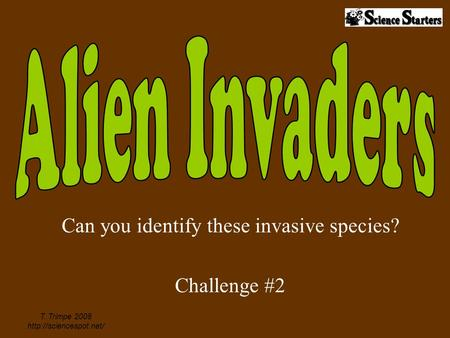 Can you identify these invasive species? Challenge #2 T. Trimpe 2008
