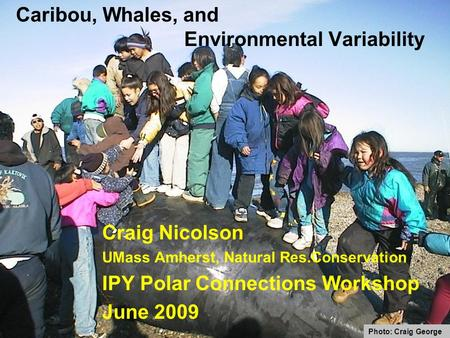 Caribou, Whales, and Environmental Variability Craig Nicolson UMass Amherst, Natural Res.Conservation IPY Polar Connections Workshop June 2009 Photo: Craig.