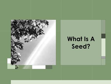 What Is A Seed?.