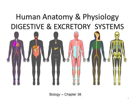 Human Anatomy & Physiology DIGESTIVE & EXCRETORY SYSTEMS