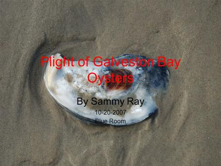 Plight of Galveston Bay Oysters By Sammy Ray 10-20-2007 Blue Room.